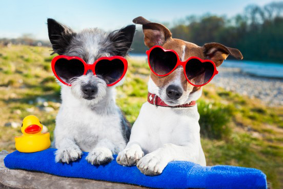 Holidaying with dogs - A complete checklist